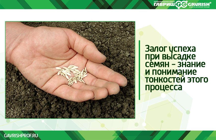 Как сажать семена правильно
