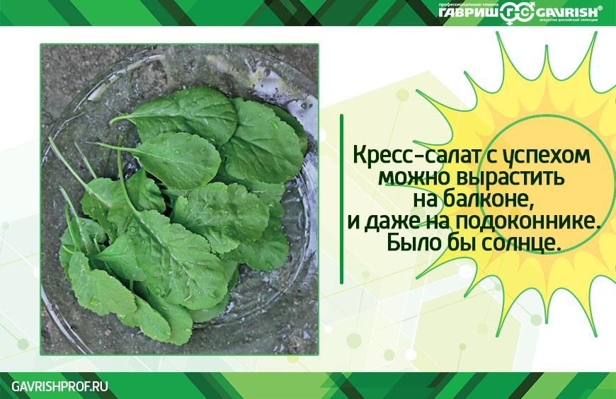 Кресс-салат выращивание на подоконнике