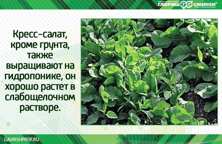 В чём выращивать кресс-салат