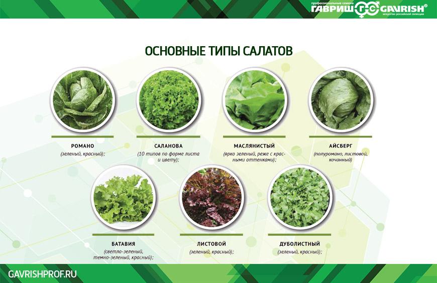 основные типы салатов