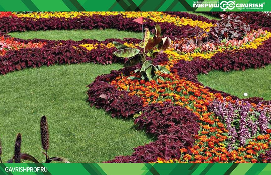 В цветнике отлично смотрится чередование желтых или оранжевых и голубых или сиреневых полос (пятен)