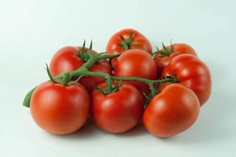 Гавриш Профессиональные семена томат Хортица фото