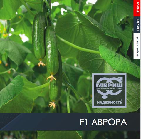 Огурец F1 Аврора из линейки «Гавриш. Профессиональные семена».