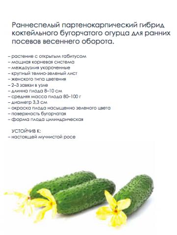 Описание Огурец F1 Джаз от подразделения «Гавриш. Профессиональные семена».