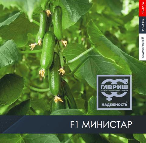 F1 Министар – огурец серии «Гавриш. Профессиональные семена».