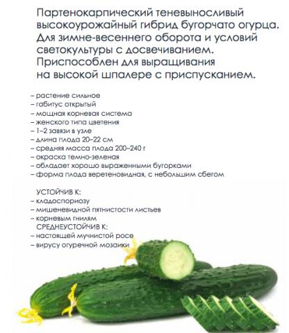 F1 Сайбер – семена огурца от «Гавриш Профессиональные семена». Описание характеристики