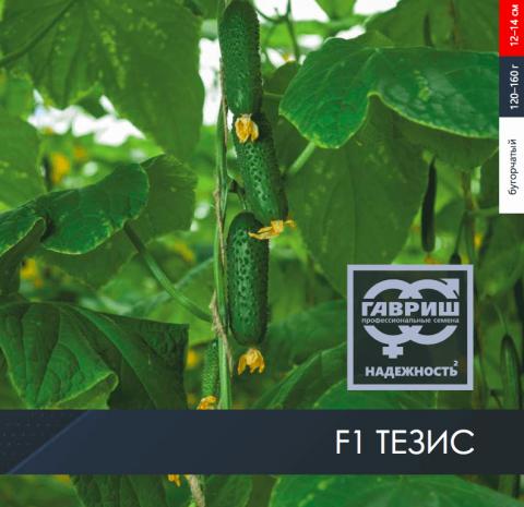 F1 Тезис – огурец от Гариш Профессиональные семена