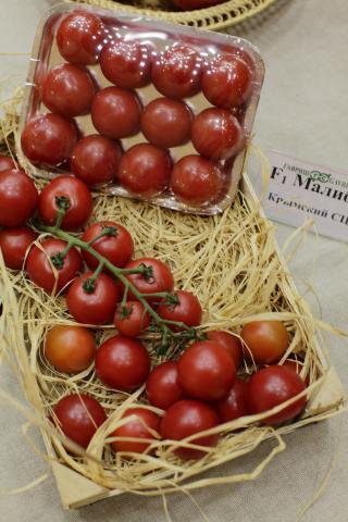 томат F1 Малибу плоды