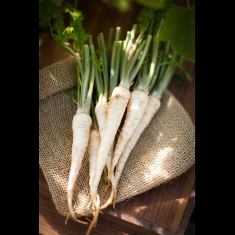 Семена петрушка корневая «Петровна» от Гавриш
