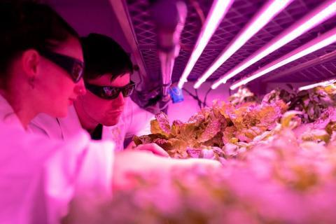 Агрономы в вертикальной теплице с искусственным освещением
