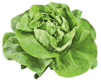 Гавриш Профессиональные семена салата листового и кочанного