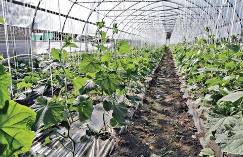 Оптимальный микроклимат для овощей