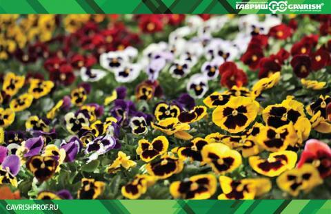 Красивый и практичный цветник