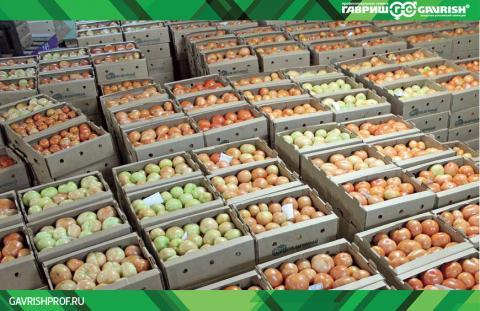 Опыт выращивания томата F1 Якиманка