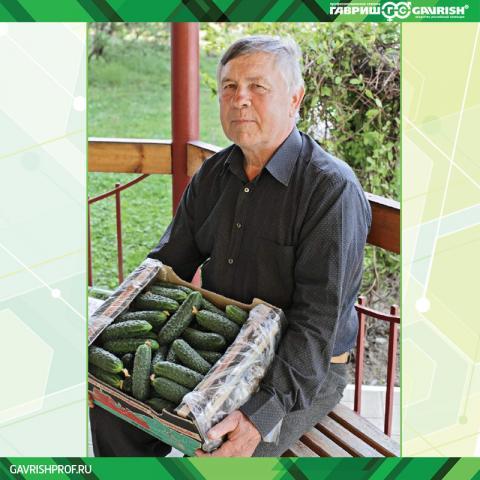 Овощевод Виктор Радченко предпочитает гибриды огурца от компании Гавриш