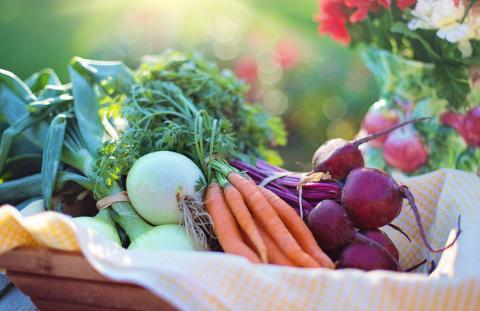 Производство органической продукции — одно из самых выгодных направлений в сельском хозяйстве
