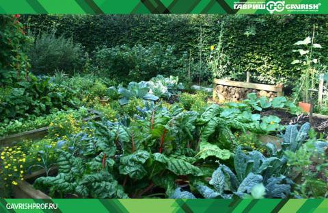 По задумке дизайнера небольшой огород отлично дополняет внешний вид сада
