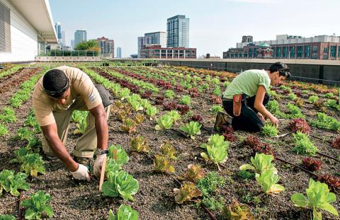 Сити-фермерство — новое и рентабельное направление сельского хозяйства