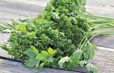 Петрушка является неотъемлемой частью сельскохозяйственной продукции наряду с редькой, морковью и свеклой