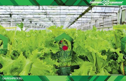 Гавриш Профессиональные семена салата