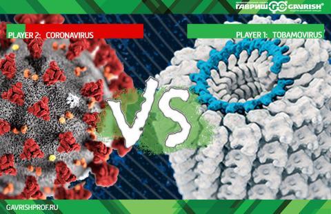 Тобамовирус для вакцины от коронавирусов