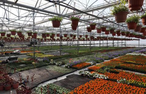 Разнообразие качественных семян цветов от компании Гавриш