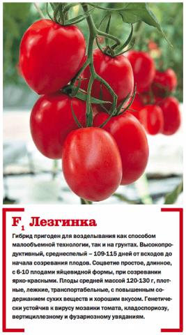 Устойчивый к вершинной гнили томат Лезгинка