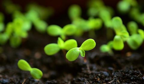 Ростки семян в почве
