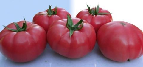 Розарио томат. Устойчив к растрескиванию
